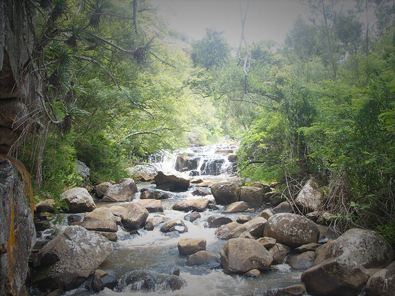 At beautiful Bermanzi, we have offer hiking in Mpumalanga along with quality accommodation.